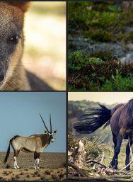 lightroom-wildlife-presets02