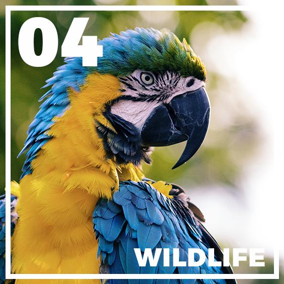 04-wildlife-presets-for-lightroom