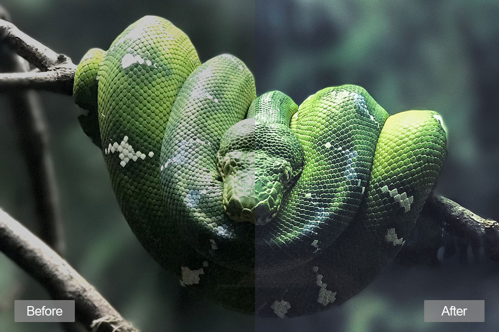 wildlife-lightroom-presets1