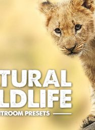 wildlife-lightroom-presets