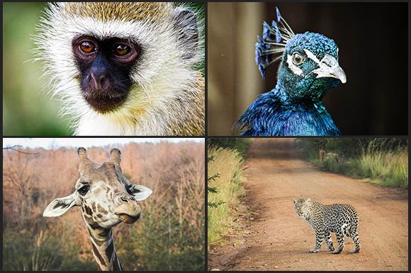 wildlife-lightroom-presets01