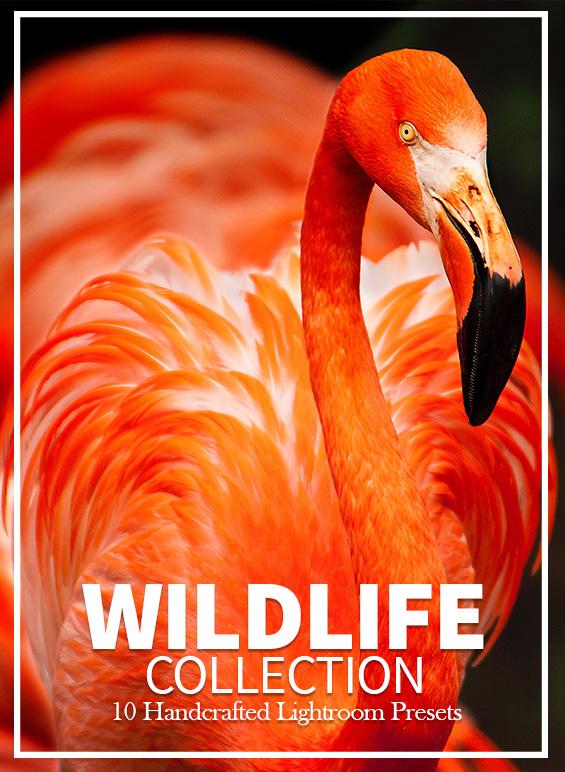 lightroom-preset-wildlife