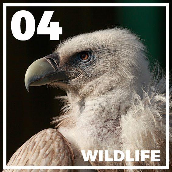 wildlife-lightroom-presets2